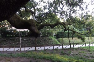ramoest